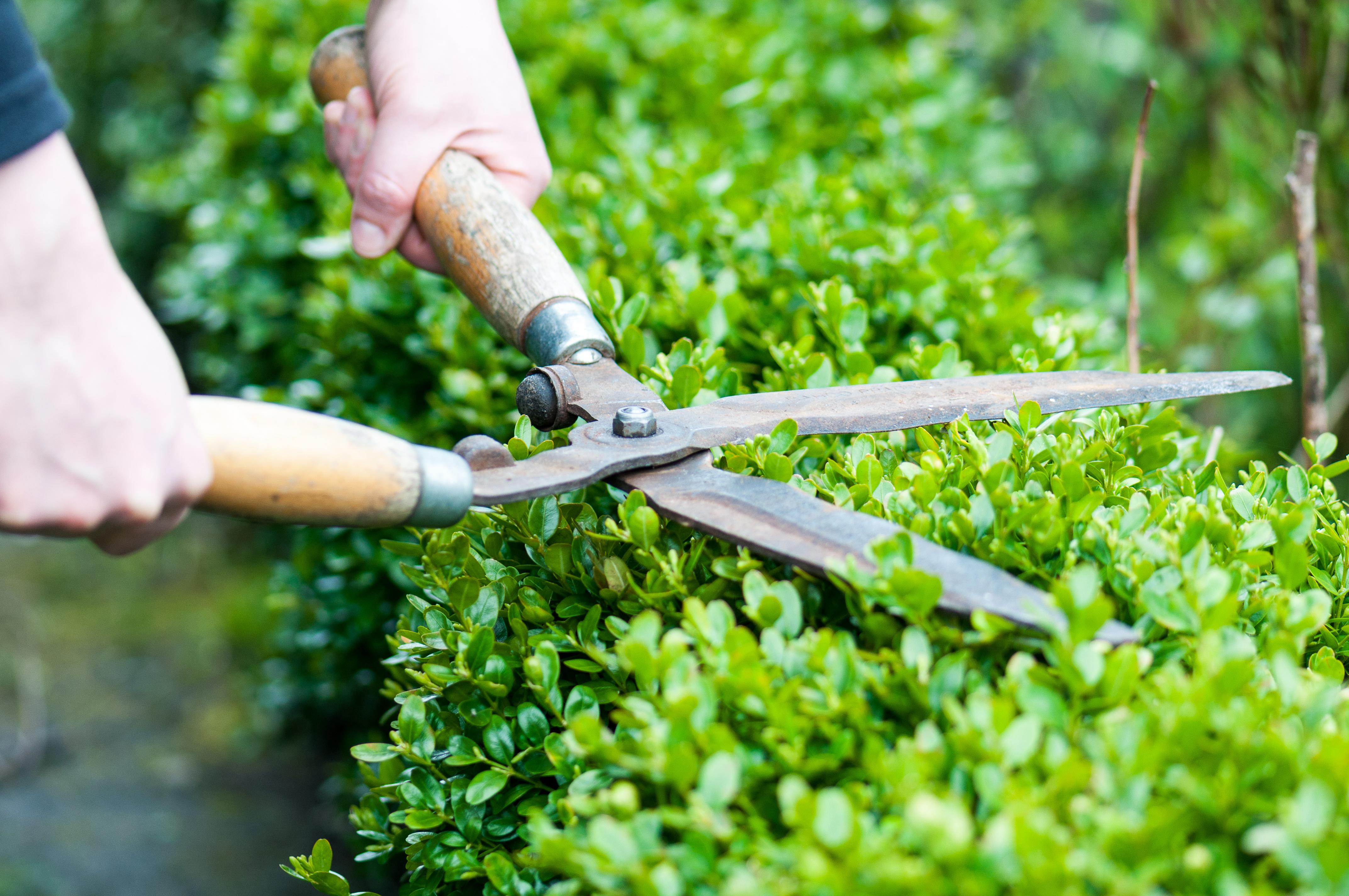 Des haies de séparation de jardin sans trop d\'entretien