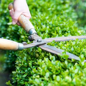 Des haies de séparation de jardin sans trop d'entretien