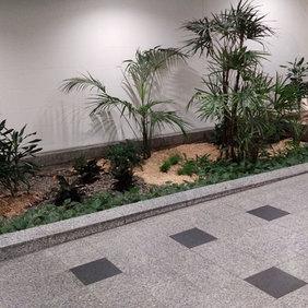 Minis palmiers intérieurs